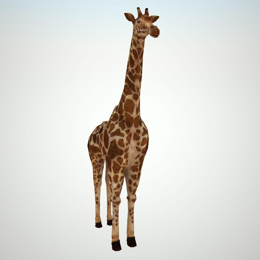 Safari djur samling royalty-free 3d model - Preview no. 13