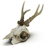 鹿の頭蓋骨 3d model