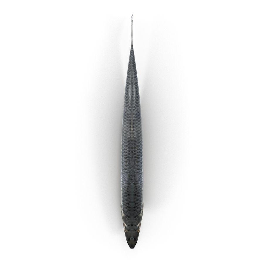 鲱鱼鱼索具 royalty-free 3d model - Preview no. 15