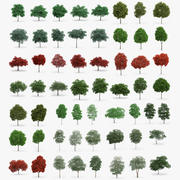 60 Trees Collection 3d model