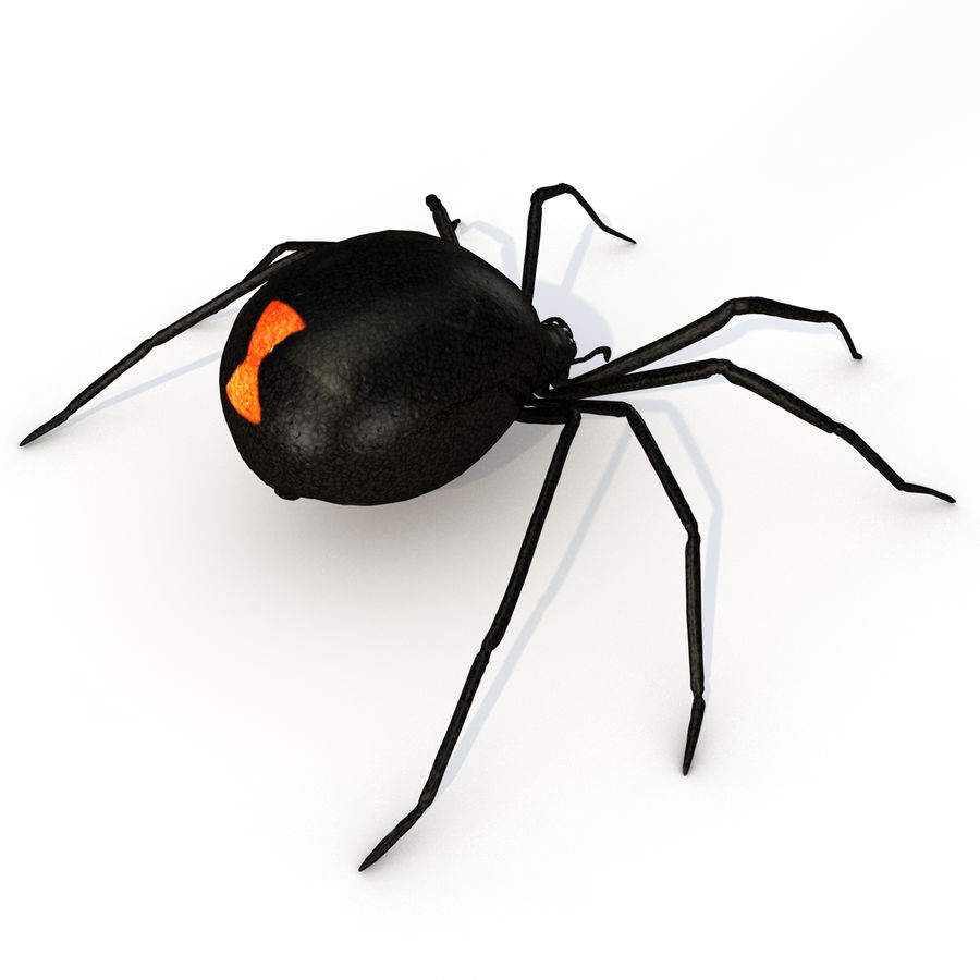 black widow royalty-free 3d model - Preview no. 4