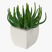 多肉植物06 3d model