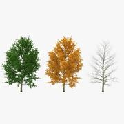 Kolekcja modeli 3D drzewa topoli żółtej 3d model