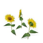 Düşük çokgen ayçiçeği 3d model