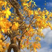 무리 잎 나무 사용자 정의 계절 06 3d model