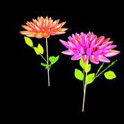 ダリアの花(HP) 3d model