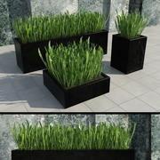 현대 식물 2 3d model