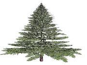 赤い杉の木(Xマス) 3d model