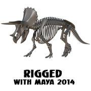 Szkieletowy szkielet Triceratopsa 3d model