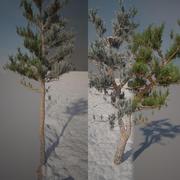 Pini estate e inverno 3d model