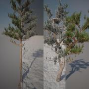 Pijnbomen zomer en winter 3d model