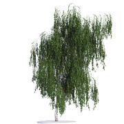 Birch tree 3 seasons 3d model