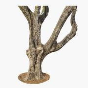 Дерево жакаранда 3d model