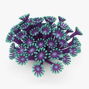 Poritidae Coral 3d model