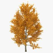 Model 3D drzewa topoli żółtej jesieni 3d model