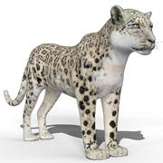 Leopardo Branco (Bares) 3d model