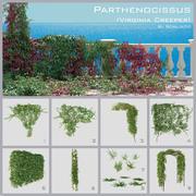 Parthénocisse (Virginia Creeper) 3d model
