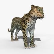 アムールヒョウ 3d model