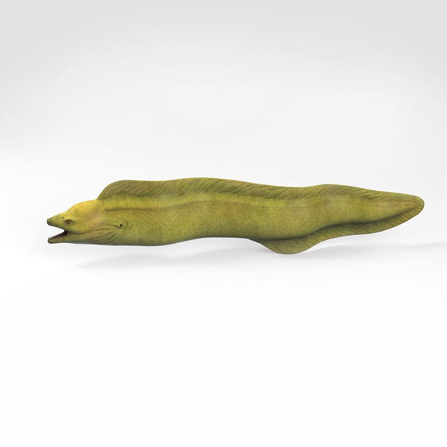 murena verde anguilla royalty-free 3d model - Preview no. 3