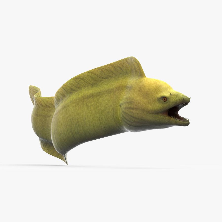 murena verde anguilla royalty-free 3d model - Preview no. 1