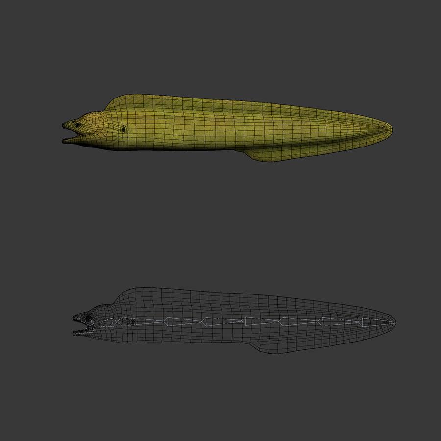 murena verde anguilla royalty-free 3d model - Preview no. 10
