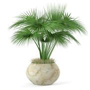 In einen Topf pflanzen 3d model