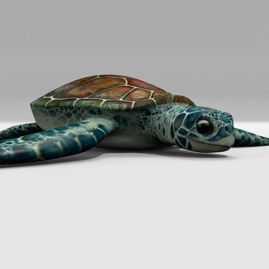 Tartarugas royalty-free 3d model - Preview no. 3