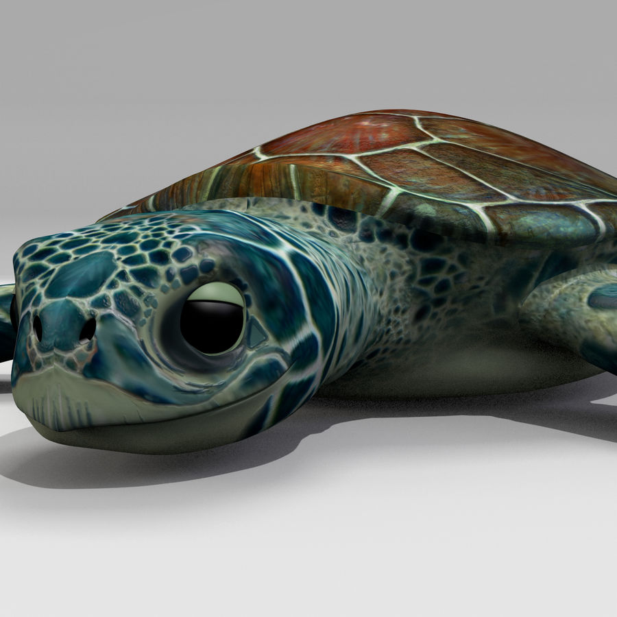 Tortugas royalty-free modelo 3d - Preview no. 4