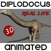 Dinosauro di Diplodocus della vita reale - Animato 3d model