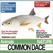 Common Dace 3d model