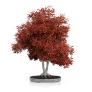 Красное дерево бонсай 3d model