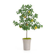 Doniczkowe Drzewo Cytrynowe 3d model