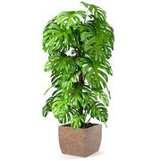 植物龟背竹 3d model