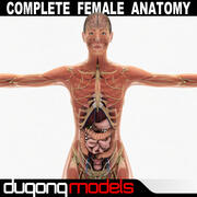Female Anatomy Pack Complete (Textured) 3d model
