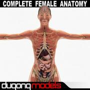 Kadın Anatomi Paketi Tamamlandı (Dokulu) 3d model