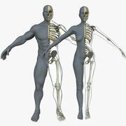 男性/女性骨骼与皮肤 3d model