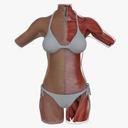 肌肉解剖女性躯干 3d model
