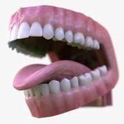 逼真的口齿舌 3d model