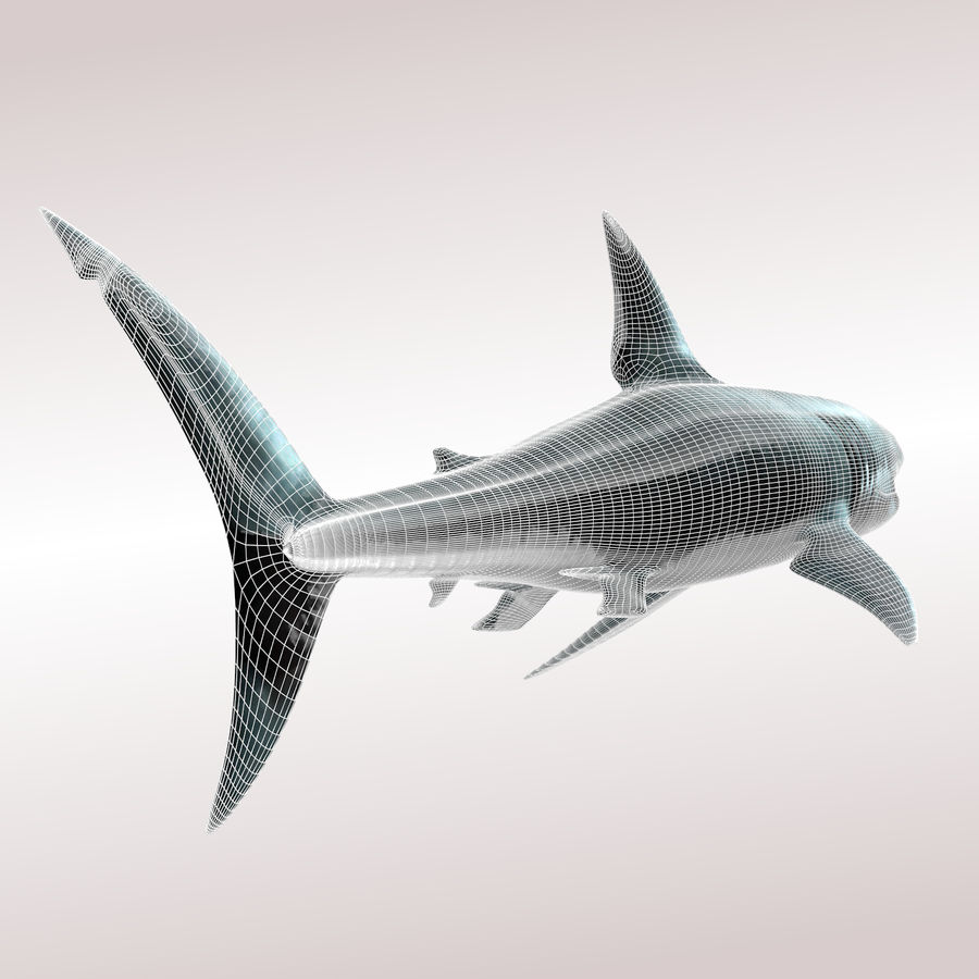 Carcharodon carcharias/megalodon royalty-free 3d model - Preview no. 7