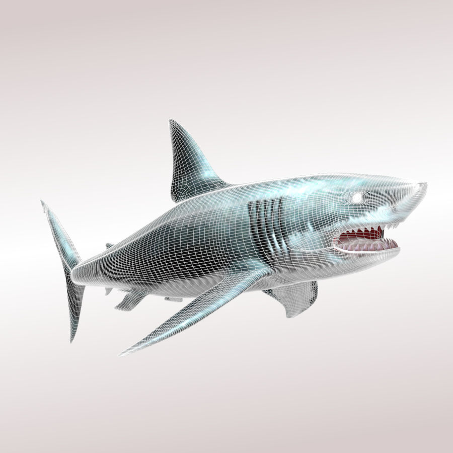 Carcharodon carcharias/megalodon royalty-free 3d model - Preview no. 6