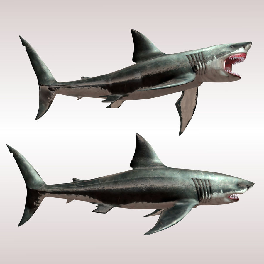 Carcharodon carcharias/megalodon royalty-free 3d model - Preview no. 2