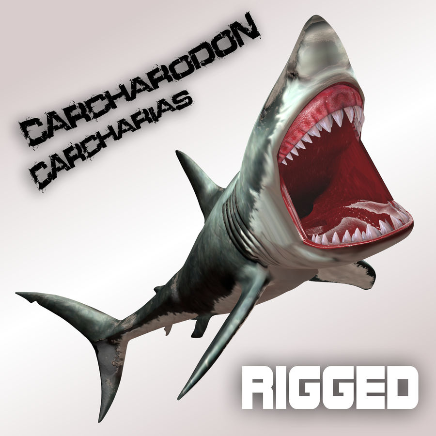 Carcharodon carcharias/megalodon royalty-free 3d model - Preview no. 1