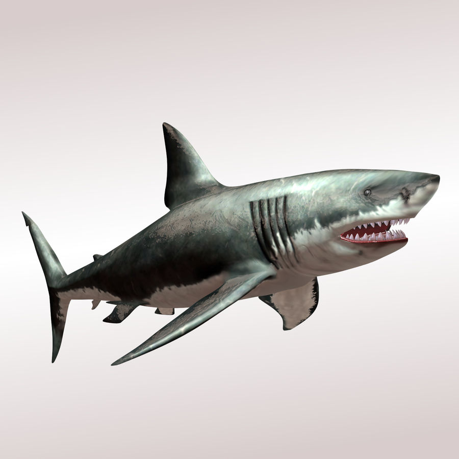 Carcharodon carcharias/megalodon royalty-free 3d model - Preview no. 5