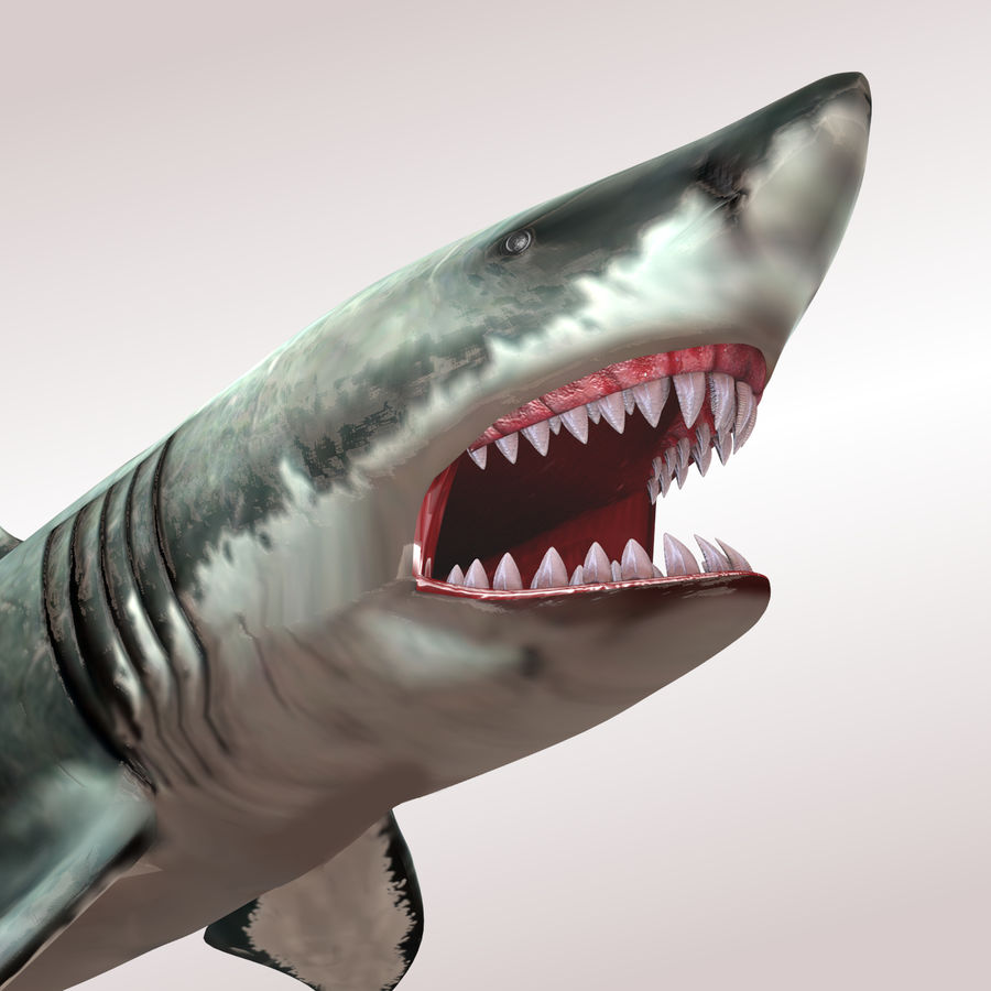Carcharodon carcharias/megalodon royalty-free 3d model - Preview no. 3