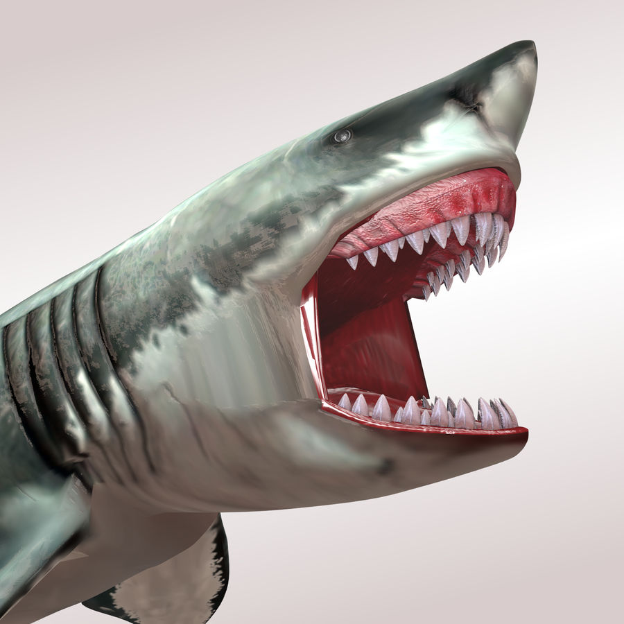 Carcharodon carcharias/megalodon royalty-free 3d model - Preview no. 4