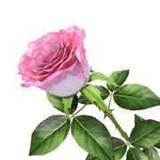 rosa v4 modelo 3d