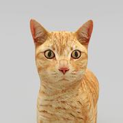 Katze 3d model