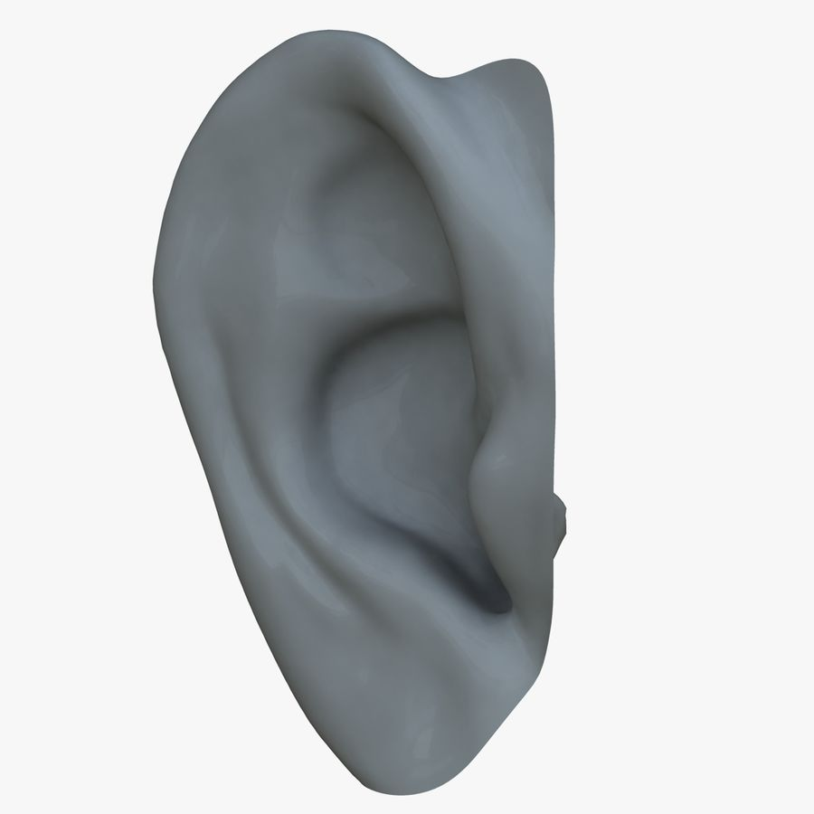 耳 royalty-free 3d model - Preview no. 4