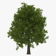 Kırmızı Meşe Ağacı Yaz 3d model