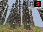 Birch autumn  8K 3d model